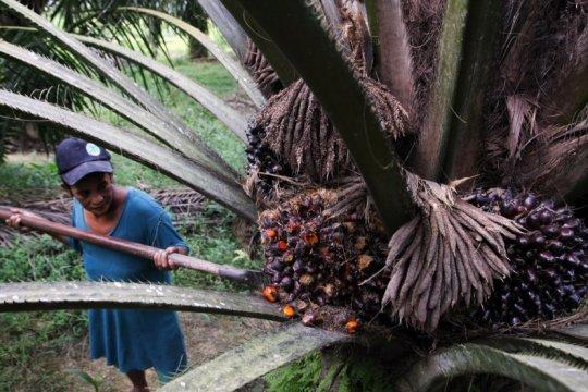Dubes RI bahas kelapa sawit di  Parlemen Belanda