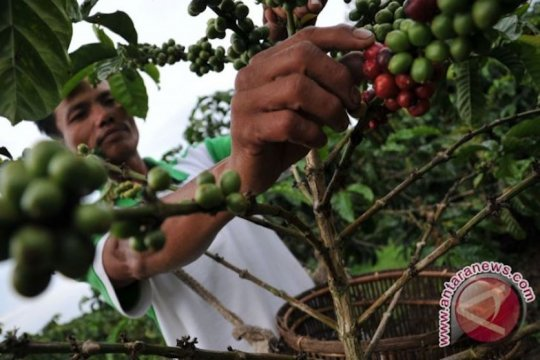 "Kedai kopi ""booming"", petani tiarap"