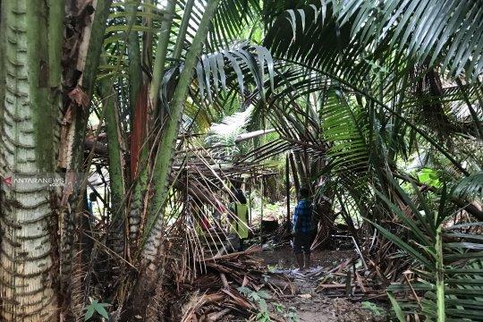 Hadiah Bumi untuk cinta Suku Moi Kelim pada hutan dan lautnya