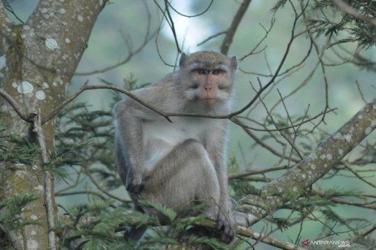 Bocah di Bogor dirawat intensif lantaran diserang monyet