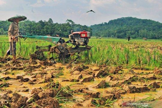Kementan harus berikan insentif ekonomi lebih kepada petani