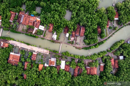 Hutan mangrove pesisir Demak