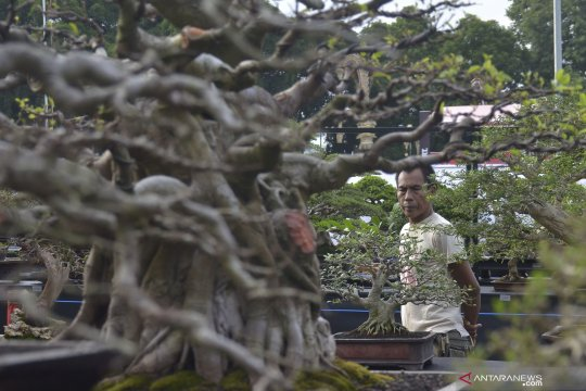 Kontes Bonsai Nasional