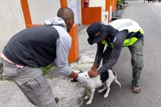 Dua warga Flores meninggal akibat gigitan anjing rabies