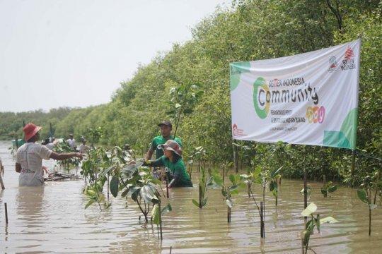 Semen Indonesia tanam 1.000 mangrove di Gresik.