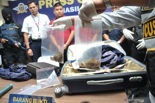 Penyelundupan sisik trenggiling dan teripang diungkap BC Kualanamu