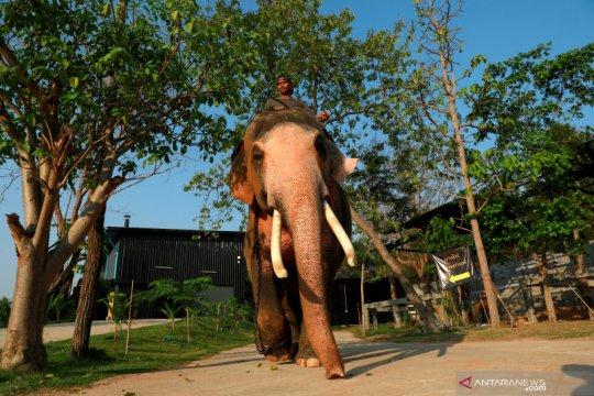 Enam gajah mati setelah jatuh ke air terjun di Thailand
