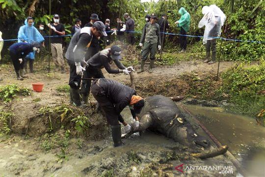 Badak Jawa ditemukan Mati