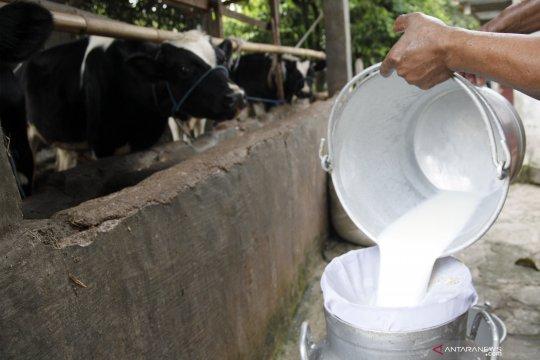 Produksi susu sapi nasional