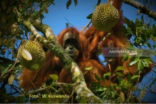 IUCN turun tangan, revisi AMDAL PLTA Batang Toru masih berjalan