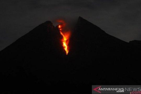 Guguran lava meluncur dari Gunung Merapi sejauh 950 meter