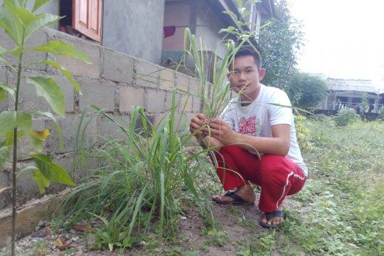 Serai Wangi, tumbuhan paling dicari saat Ramadhan