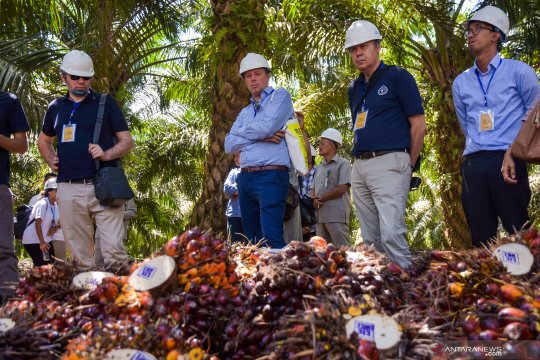 Disbun: industri sawit Riau masih ramah lingkungan