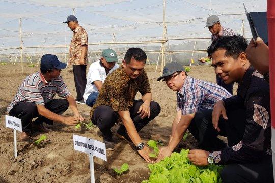 PTPN X targetkan luas areal tanam tembakau 510 hektare