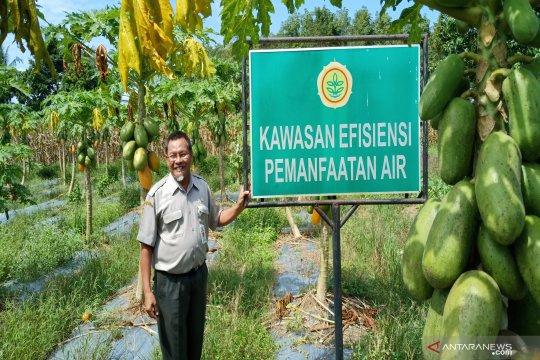 Rekayasa air rawa mungkinkan petani panen 2-3 kali