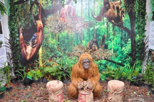 Kampanye Orangutan Sumatera dan Tapanuli