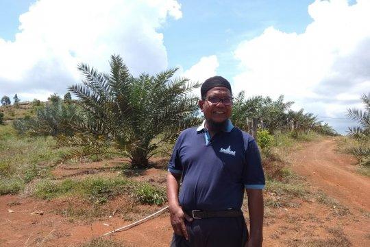 Ratusan hektare lahan tandus ditanami 7.000 batang kurma di Aceh