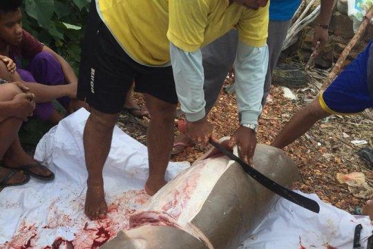 Seekor duyung ditemukan mati terjerat jaring di Tanjungpinang