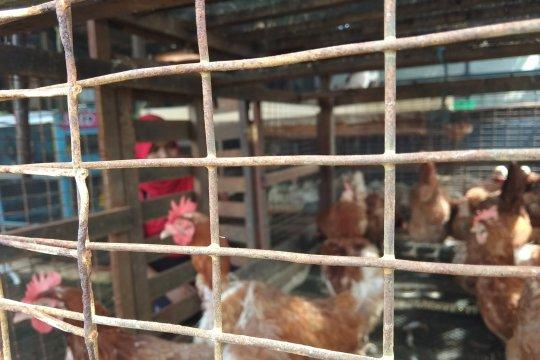 Harga ayam di Palembang bergerak naik jelang Lebaran