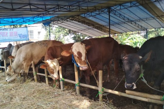 Pemkab Sukabumi gandeng peternak untuk tekan harga jelang Lebaran