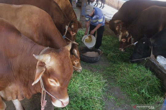 LIPI:Peningkatan populasi-mutu genetik dukung peternakan berkelanjutan