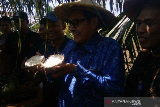 Dosen UMP gunakan teknologi kultur jaringan kembangkan kelapa kopyor