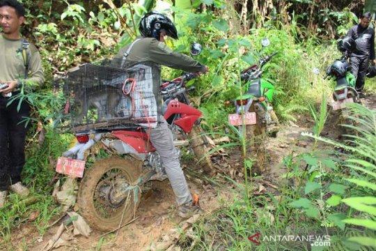 BKSDA Kalteng lepasliarkan monyet ekor panjang di Pararawen