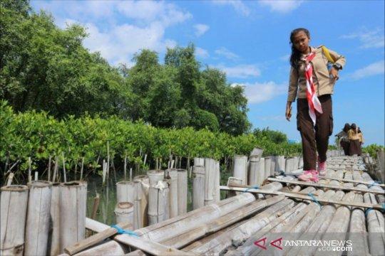 Franky Welirang ingatkan pentingnya konservasi bakau di Kapuk