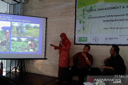 Peneliti IPB sebut hama jagung asal Brasil telah masuk ke Indonesia
