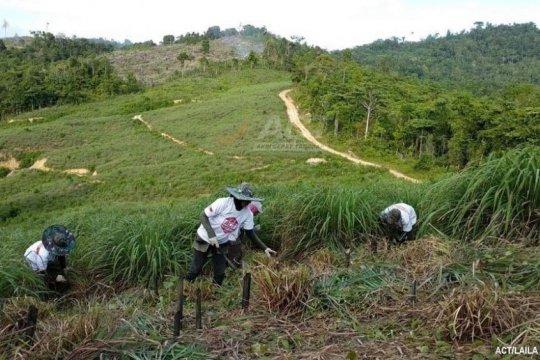 ACT Aceh: Satu hektare lahan serai wangi bisa produksi minyak 200 Kg