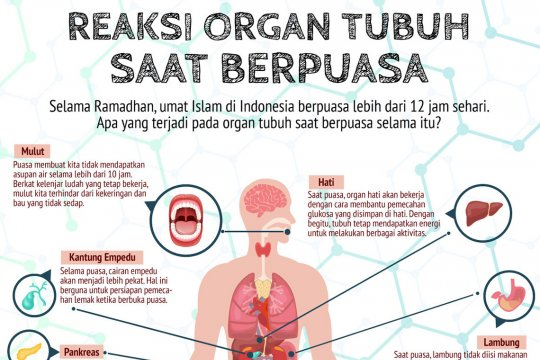 Reaksi organ tubuh saat berpuasa