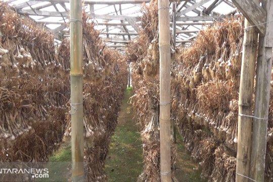 Sukabumi dijadikan proyek percontohan program swasembada bawang putih