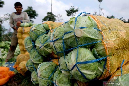 BNPB: Tim gabungan masih sisir kebakaran Gunung Sumbing