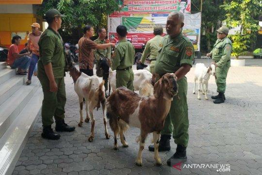 KPPS berprestasi dihadiahi kambing