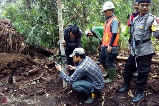BBKSDA Riau pasang kamera jebak di pelintasan harimau sumatera