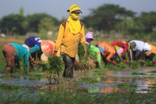 Duta Petani Muda bangun kesadaran untuk jadi petani