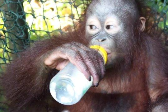 Arti kehadiran bayi Nadia di Taman Safari Prigen