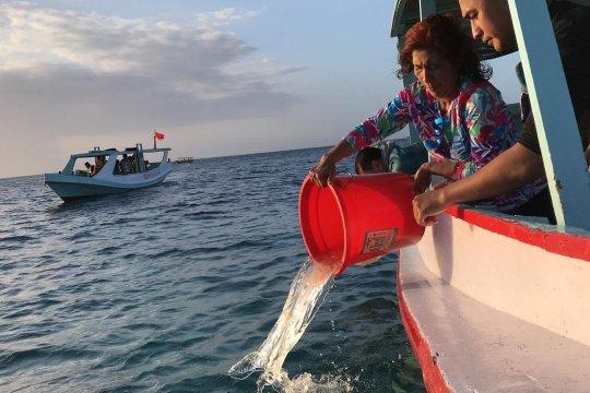 Menteri Susi lepas liarkan 37.000 benih lobster di Banyuwangi