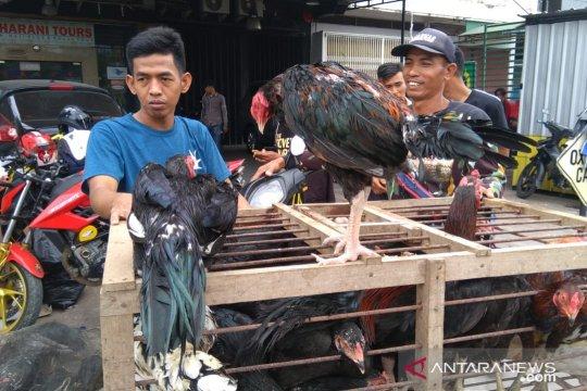 Harga ayam kampung di Makassar melonjak menjelang Lebaran 2019