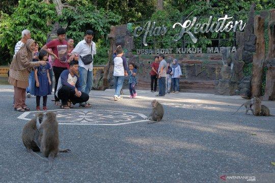 Meningkat, kunjungan wisatawan ke Hutan Monyet Alas Kedaton Tabanan