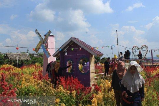 Banjir taman bunga di Musi Rawas manjakan wisatawan