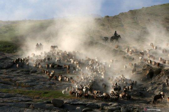 Penggembala ternak di Xinjiang Uighur