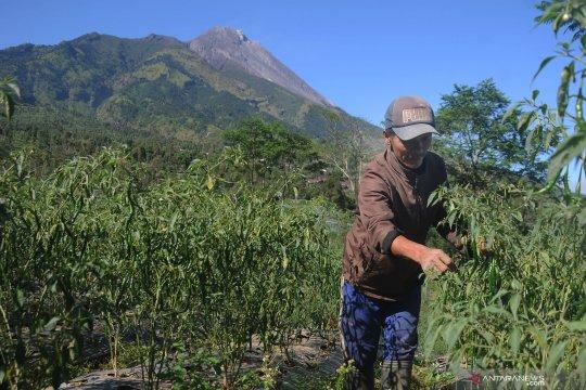 BPPTKG: pertumbuhan kubah lava Gunung Merapi masih stabil