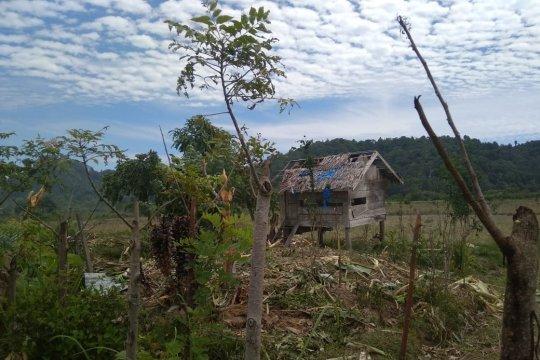 Warga Aceh Jaya khawatir gajah liar kembali obrak-abrik sawah