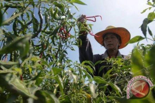 Petani diimbau tanam hortikultura selama musim kemarau