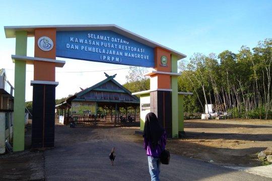 Meniti jalan jadikan Hutan Bakau Tongke-Tongke magnet wisata Sinjai