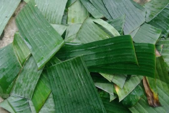 Mahasiswa Unimed membuat anti air dari daun pisang