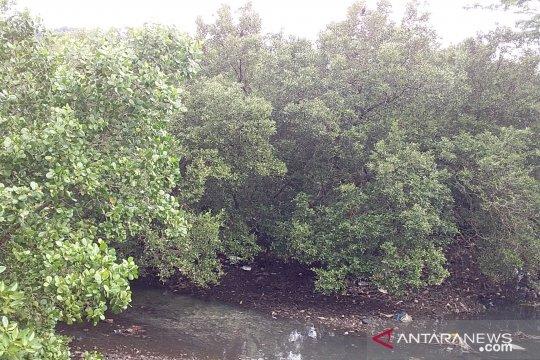 Masyarakat diimbau jangan rusak hutan bakau