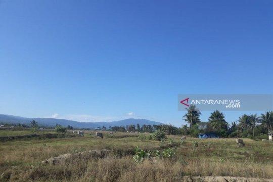 Banyak lahan pertanian masih mengganggur di Sigi