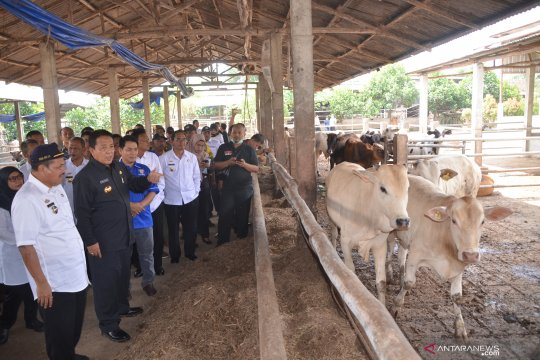 Kota Metro percontohan pengembangbiakan sapi jenis baru